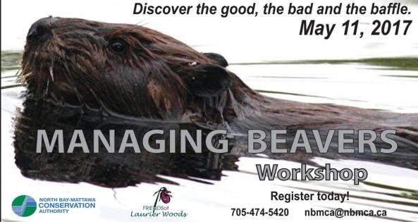 Beaver Workshop Spotlight